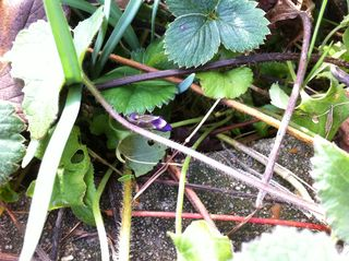 Ph3 IMG_0582_violettes_2011_02_22