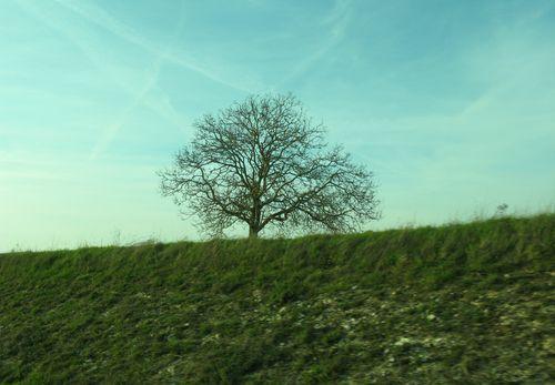 2 arbre IMG_3644